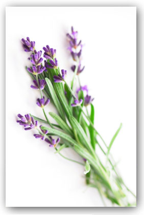 photograph of lavender